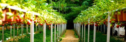Best Places to Pick Your Own Fruit in Europe This Summer - The Wise Traveller