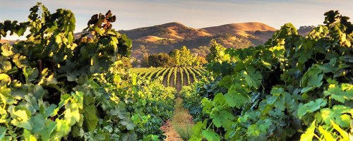 California's Winemaking Secret—Livermore Valley - The Wise Traveller