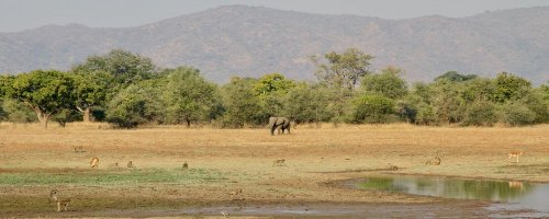 Chindeni Bush Camp - South Luangwa National Park - Zambia - Animal Bootcamp - The Wise Traveller
