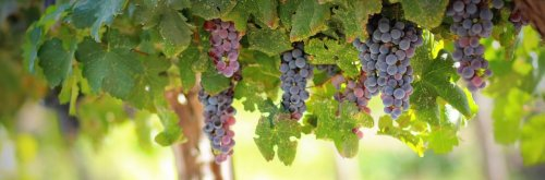 Discovering Israel's Wineries - The Wise Traveller