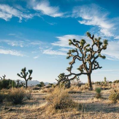 How to Spend 24 Hours in Joshua Tree - California - The Wise Traveller