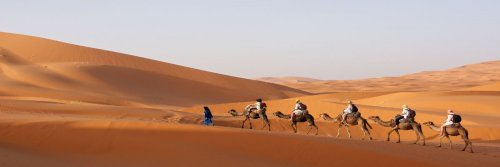 Morocco For The Solo Female - 5 Travel Tips For The Single Woman In Morocco - The Wise Traveller - Tourists on Camels in a desert