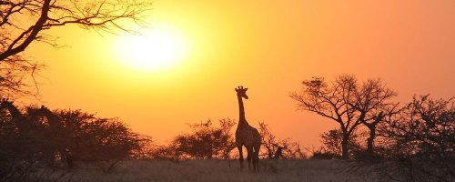 Safari Zambia Fast Facts You Need to Know - The Wise Traveller