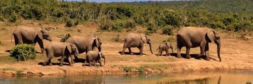 See The Big '5' Before Its Too Late - The Wise Traveller - African Elephants