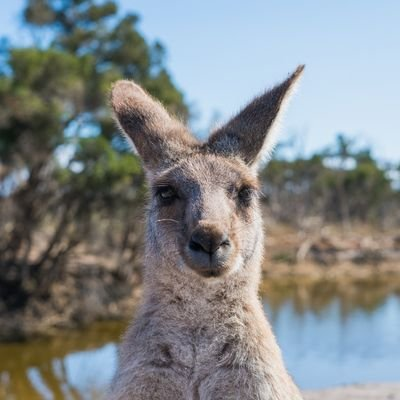 Speaking the Lingo—Aussie Slang - The Wise Traveller