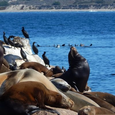 Spotting Marine Life in Monterey Bay, California - The Wise Traveller
