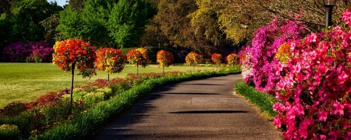 The Best Places to Visit for Spring Flowers - The Wise Traveller