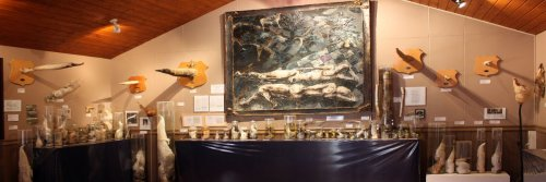 Top 5 Strange Museums - 5 Weird Museums From Around The World - The Wise Traveller - Pallological Museum - Iceland