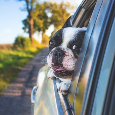 Top Tips for Taking Your Dog on Holiday with You - The Wise Traveller