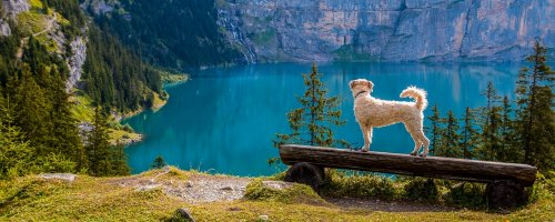 Top Tips for Taking Your Dog on Holiday with You - The Wise Traveller - Dog