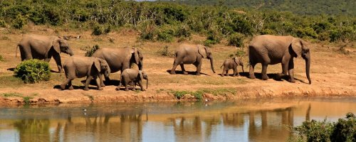 Walking African Safaris - The Wise Traveller - Herd of elephants