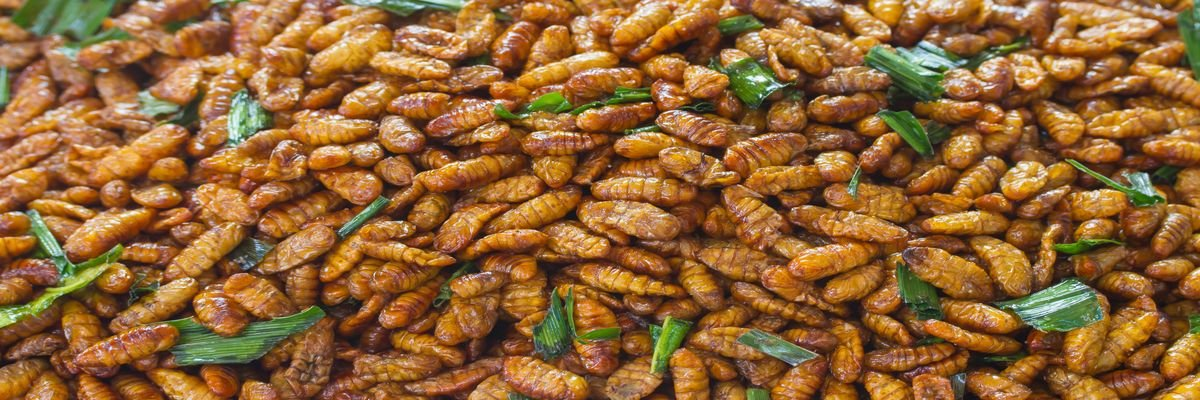 25 'Exotic' Dishes When Travelling - Top 25 Strange Foods When You Travel - The Wise Traveller - Thailand - Fried Silk Worm