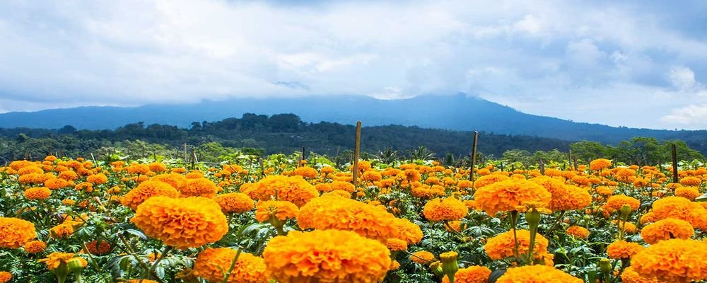 8 Most Scenic Places to Visit in Bali - The Wise Traveller - Marigold