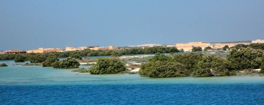 Abu Dhabi Travel Guide for First Time Travellers - The Wise Traveller - Mangrove Abu Dhabi