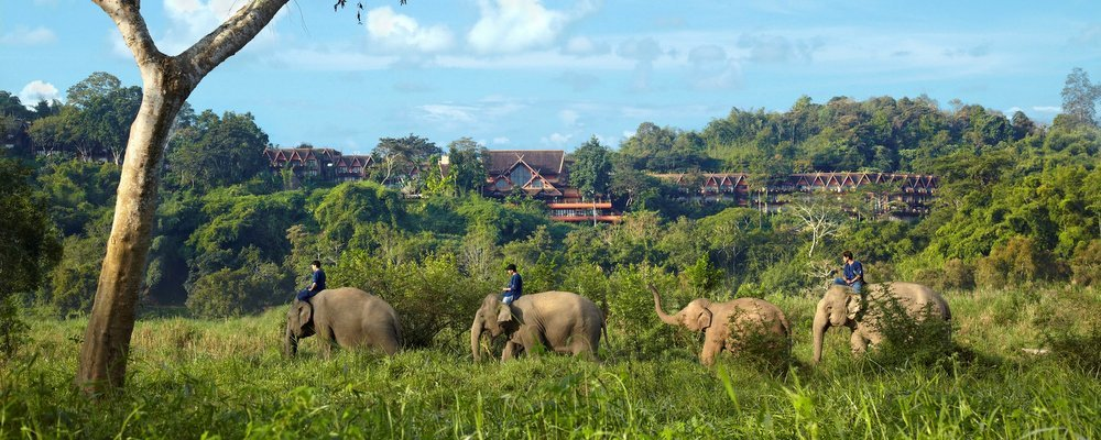 Ethical Animal Experiences For Responsible Travellers - The Wise Traveller