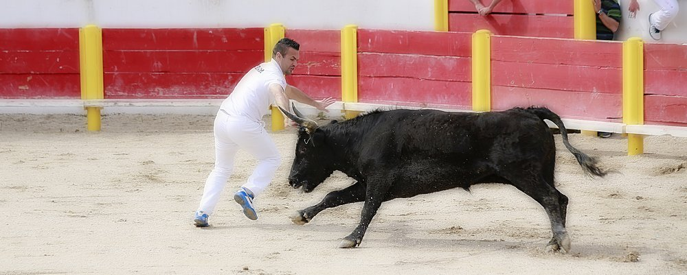Bull Fighting in France - Camargue - The Wise Traveller