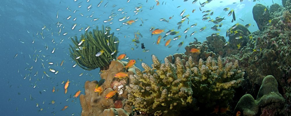 Image; Wikipedia - Top Diving Spots In Asia - The Wise Traveller