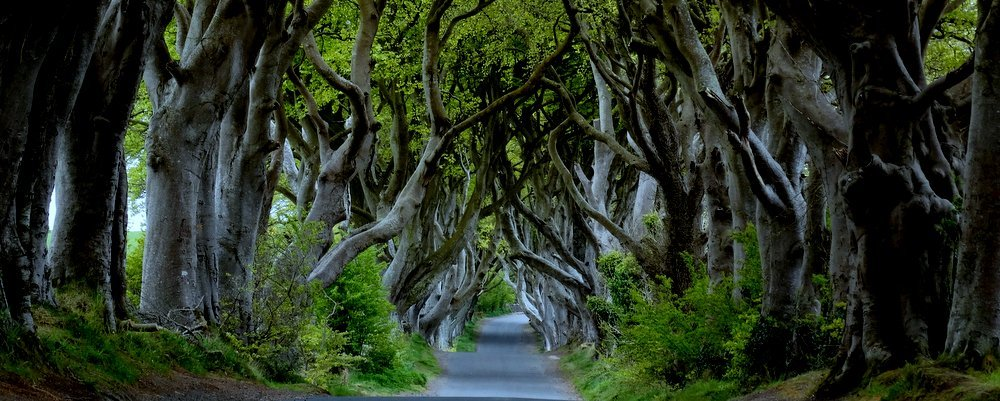 Dark Hedges near Armoy Nth Ireland - The Wise Traveller