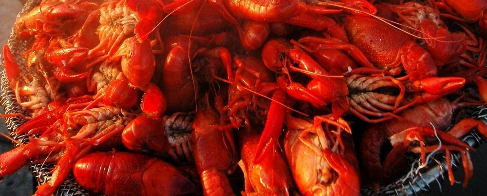 Dining Out in New Orleans - The Wise Traveller - Crawfish