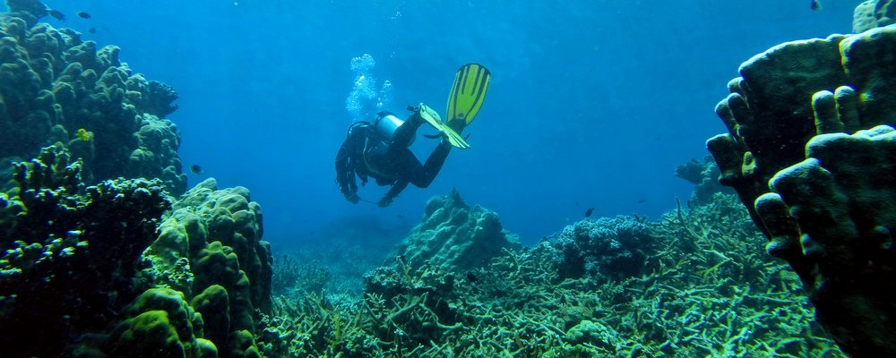 Image: The Travel Manuel - Flickr - Toiman Diving