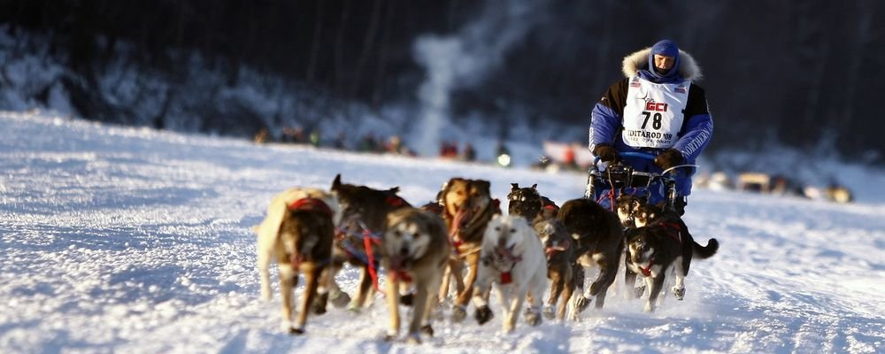 Eight Reasons Why You Should Visit Scandinavia This Year - The Wise Traveller - Dog Sledding