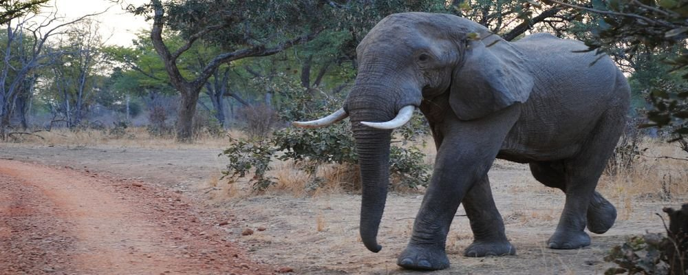 Game Hunters and Conservation—Addressing the Elephant in the Room - The Wise Traveller - Elephant