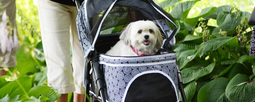 Tips for Travelling with Pets - The Wise Traveller