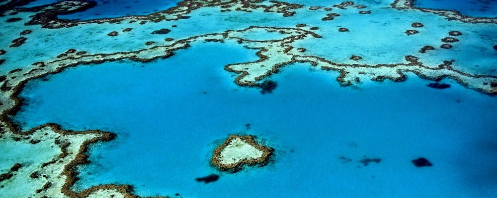 Why You Should Visit The Great Barrier Reef Now - The Wise Traveller