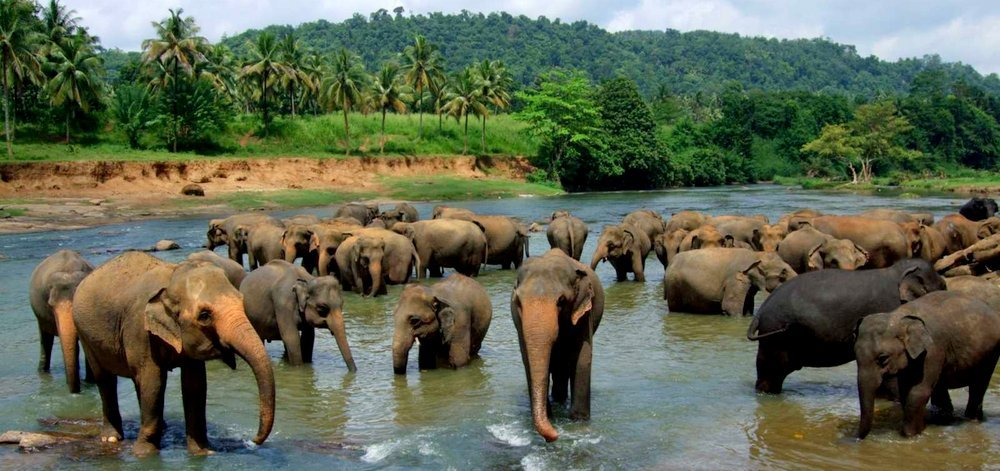 A Taste Of Sri Lanka - The Wise Traveller