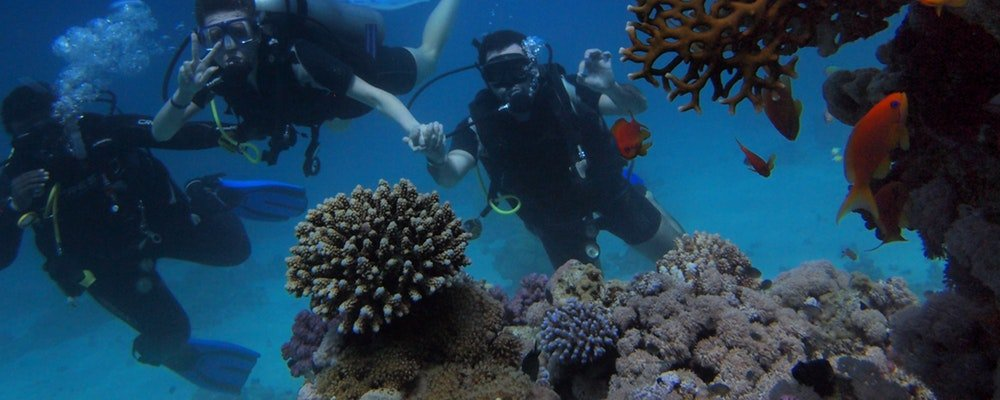 Playtime on the Great Barrier Reef - Far North Queensland - The Wise traveller