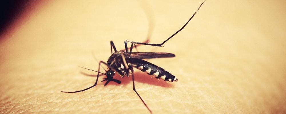 Reminders On Staying Healthy When Travelling - The Wise Traveller - Mosquito