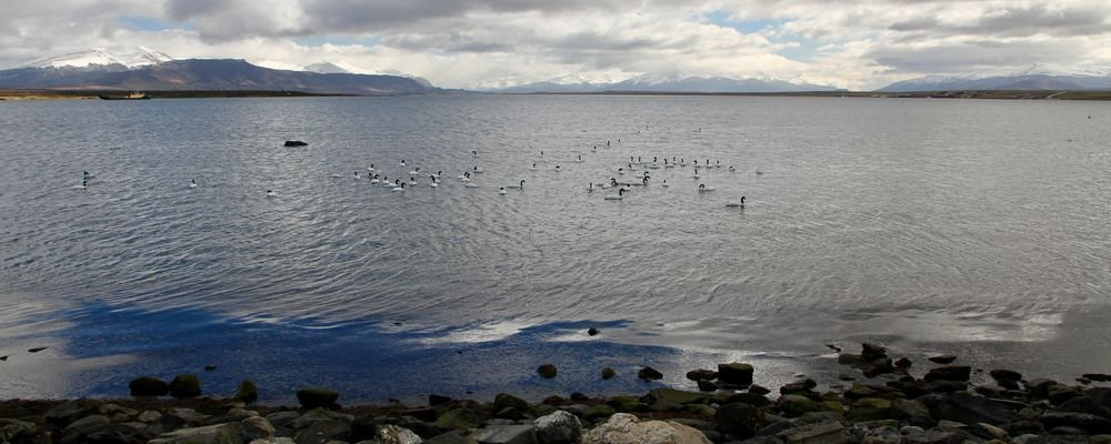 Sloths, Swans and Ice Cream in Wine– Puerto Natales - Chile - The Wise Traveller - IMG_9568
