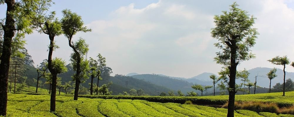 The Top 5 Places to Visit in Kerala for Senior Travellers - The Wise Traveller - Munnar