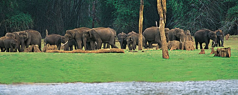 The Top 5 Places to Visit in Kerala for Senior Travellers - The Wise Traveller - Periyar_Thekkady