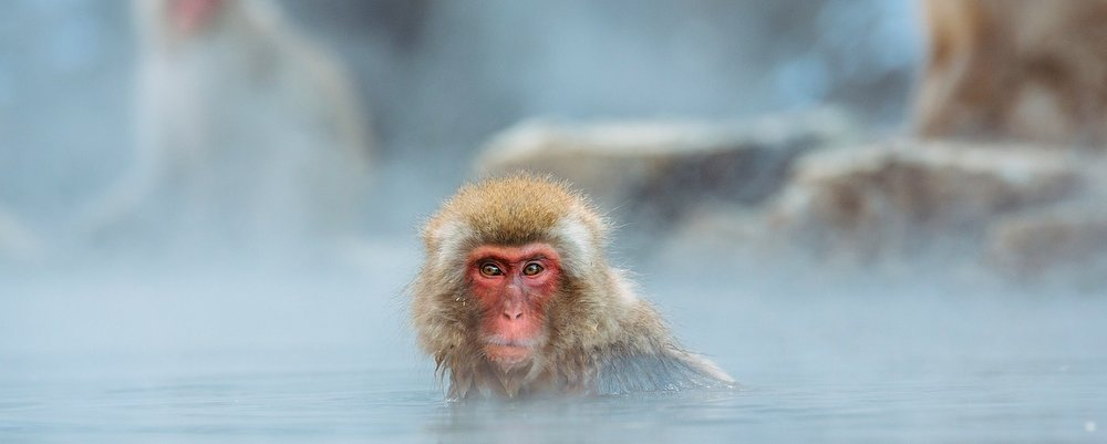 This Month In Travel - Winter Holidays - Snow Monkey Japan