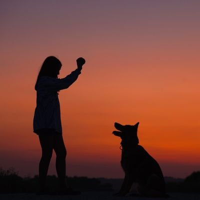 Top Tips for Taking Your Dog on Holiday with You - The Wise Traveller - Dog Train