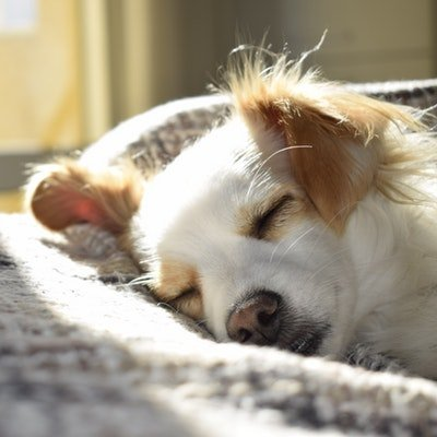 Top Tips for Taking Your Dog on Holiday with You - The Wise Traveller - Sleeping Dog
